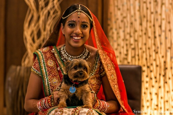 bridal fashions,indian bridal fashions,indian wedding fashion,indian bride,indian bride outfit,indian bridal outfit,wedding lengha,bridal jewelry,bridal makeup,hair and makeup,puppy,dog,pet,red bridal outfit,traditional bridal outfit,traditional indian bridal outfit,classic indian bridal outfit