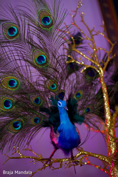 peacock,peacock-inspired,peacock theme,peacock themed,peacock reception,peacock reception theme,reception theme,• indian wedding decorations,indian wedding decor,indian wedding decoration,indian wedding decorators,indian wedding decorator,indian wedding ideas,ideas for indian wedding reception,indian wedding decoration ideas,reception decor,indian wedding reception decor,reception,indian reception,indian wedding reception,wedding reception