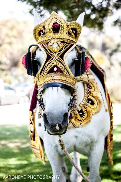 baraat,groom baraat,Indian groom,Indian groom baraat,baraat procession,baraat ceremony