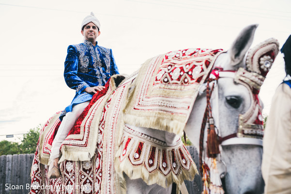 horse,horse for baraat,baraat horse,horse for indian groom,horse for indian wedding,indian wedding transportation,transportation for indian wedding,wedding transportation,transportation