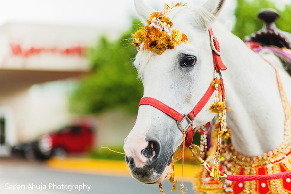 Baraat in Chicago, IL Indian Wedding by Sapan Ahuja Photography