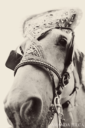 Baraat,black and white photography,traditional horse baraat,AMANDA JULCA,baraat horse,indian wedding horse,white horse for baraat