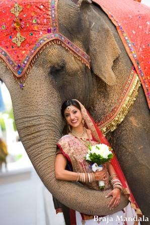 Indian wedding bridal portraits elephant in San Diego, California Indian Wedding by Braja Mandala Wedding Photography