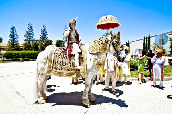 Indian wedding baraat white horse traditional