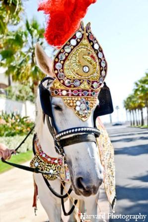 Indian wedding baraat horse in Huntington Beach, CA Indian Wedding by Harvard Photography