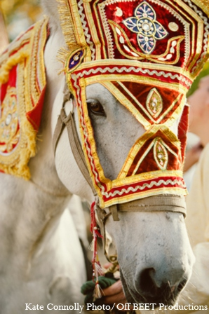Indian wedding baraat horse in Rockleigh, New Jersey Indian Wedding by Kate Connolly Photography
