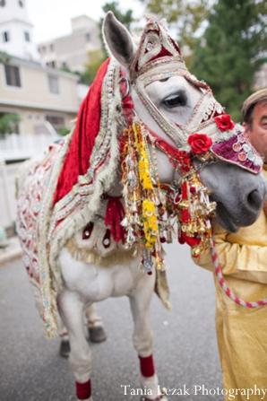 indian-wedding-baraat-horse