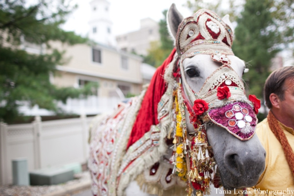 Indian-wedding-ceremony-baraat-horse