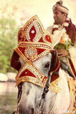 Indian-wedding-horse-white-tradtional-baraat