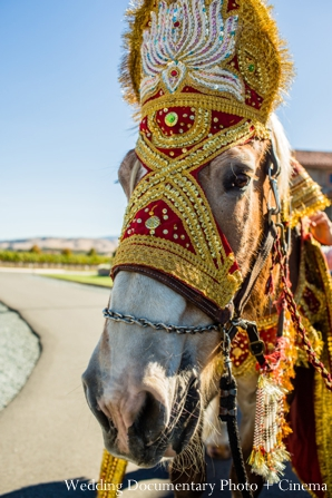 indian-wedding-baraat-groom-white-horse