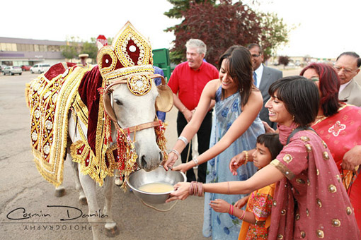 Indian wedding baraat 2 copy