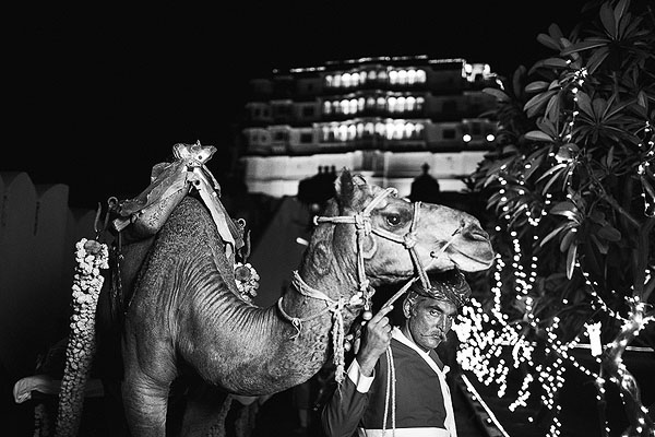 A camel awaits to take away an Indian bride and groom in Udaipur, India.